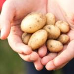 ziemniaki na diecie